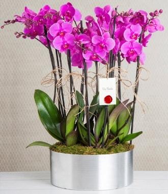 11 dallı mor orkide metal vazoda  Manisa cicekciler , cicek siparisi