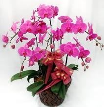 Sepet içerisinde 5 dallı lila orkide  Manisa çiçek servisi , çiçekçi adresleri