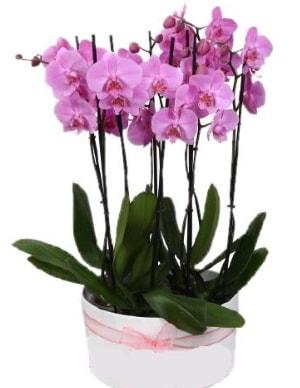 Beyaz seramik içerisinde 7 dallı mor orkide  Manisa anneler günü çiçek yolla
