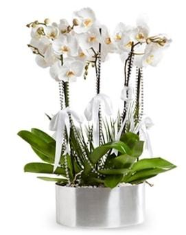 Beş dallı metal saksıda beyaz orkide  Manisa uluslararası çiçek gönderme