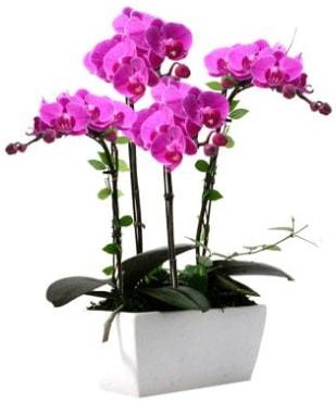 Seramik vazo içerisinde 4 dallı mor orkide  Manisa hediye sevgilime hediye çiçek