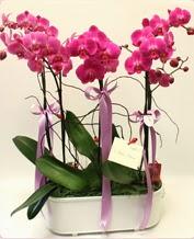 Beyaz seramik içerisinde 4 dallı orkide  Manisa çiçek servisi , çiçekçi adresleri