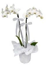 2 dallı beyaz orkide  Manisa çiçekçiler