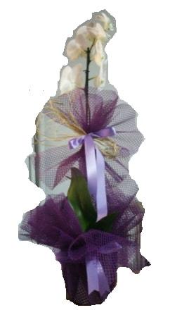 Tek dallı beyaz orkide süper kalite ithal  Manisa güvenli kaliteli hızlı çiçek