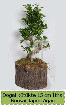 Doğal kütükte İthal bonsai japon ağacı  Manisa 14 şubat sevgililer günü çiçek