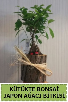 Kütük içerisinde doğal bonsai ağacı  Manisa anneler günü çiçek yolla