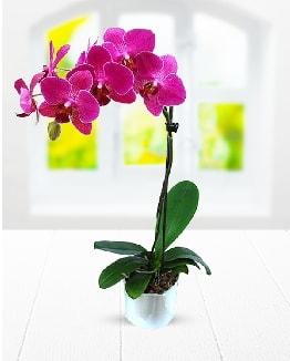 Tek dallı mor orkide  Manisa hediye sevgilime hediye çiçek