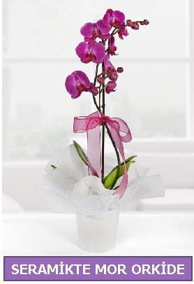 Seramik içerisinde birinci kalite tek dallı mor orkide  Manisa cicek , cicekci