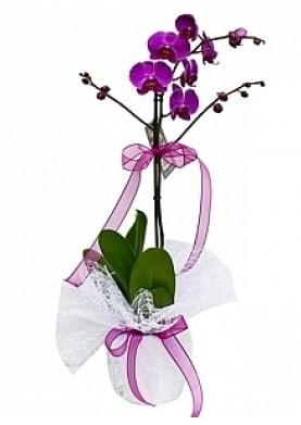 Tekli Mor Orkide  Manisa uluslararası çiçek gönderme