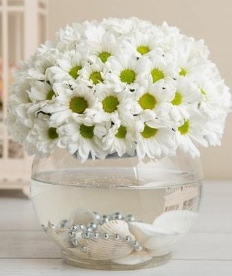 Fanusta beyaz Papatya  Manisa hediye sevgilime hediye çiçek