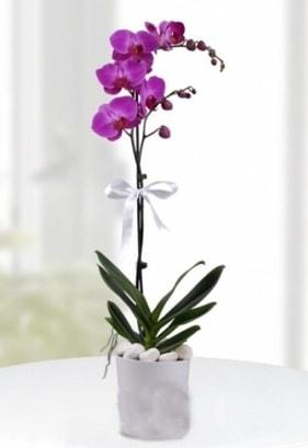 Tek dallı saksıda mor orkide çiçeği  Manisa online çiçekçi , çiçek siparişi