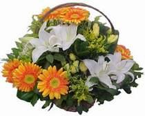 Manisa çiçek siparişi vermek  sepet modeli Gerbera kazablanka sepet